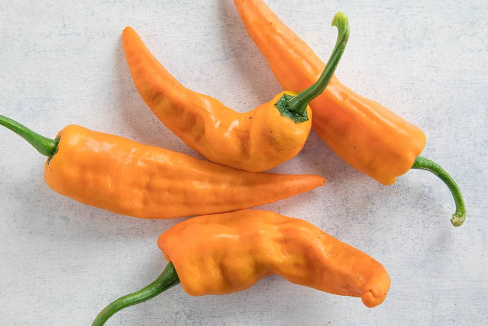 Chilhuacle Amarillo Chili Peppers