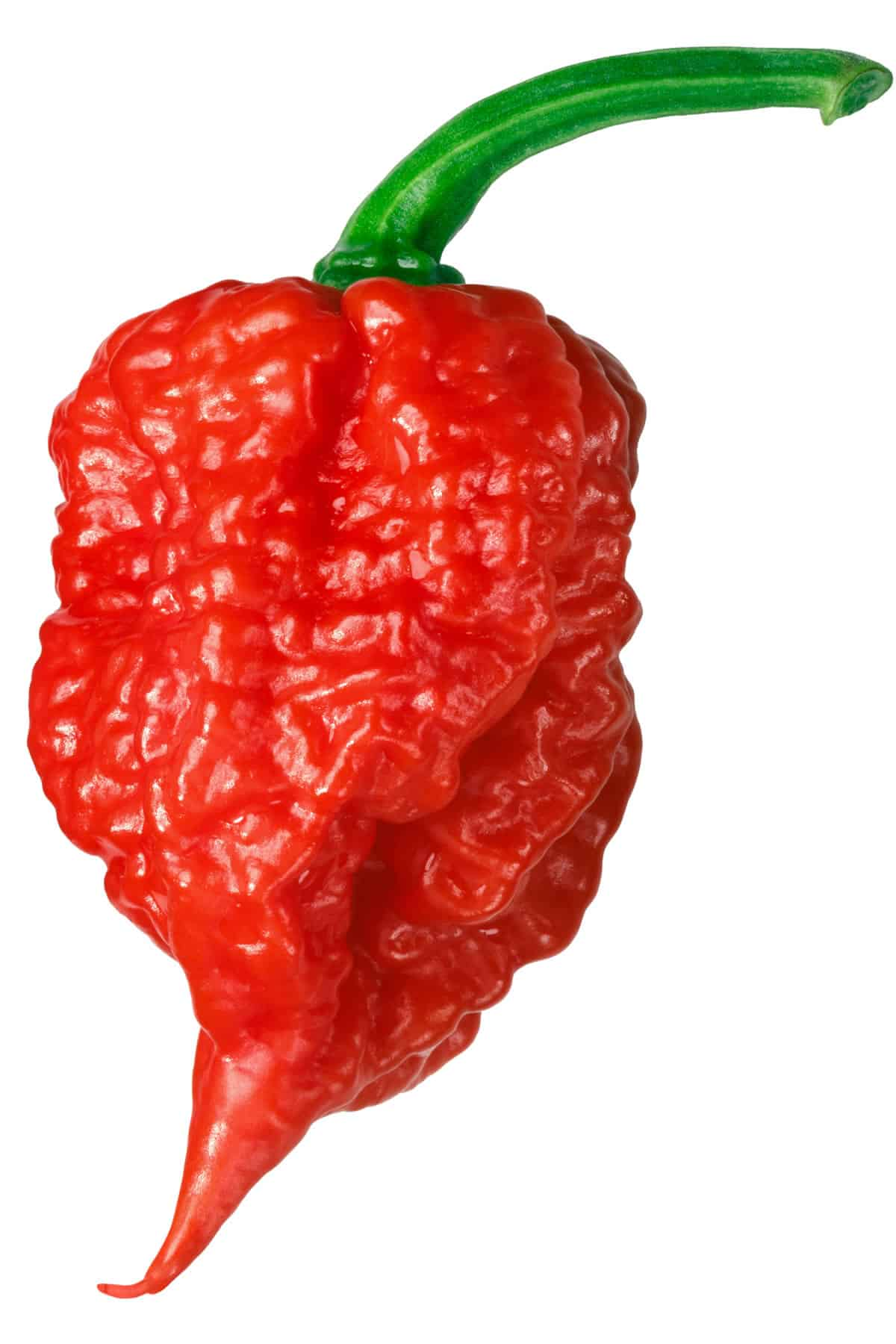 Carolina Reaper: Hottest Pepper in the World – All About It