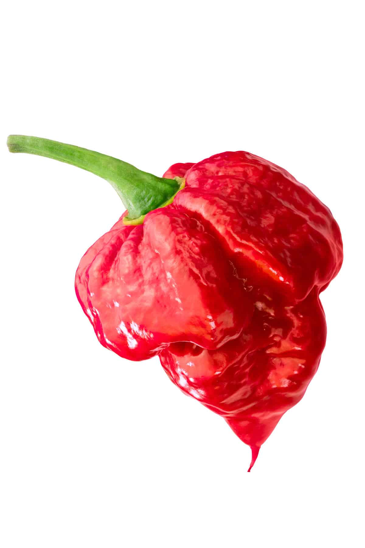 Trinidad Scorpion Butch T Pepper