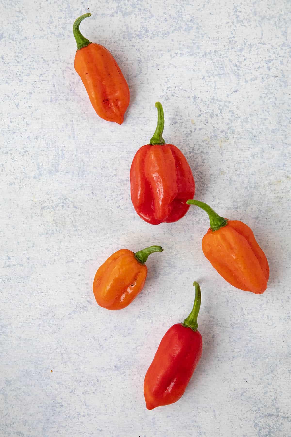 Aji Dulce Chili Peppers