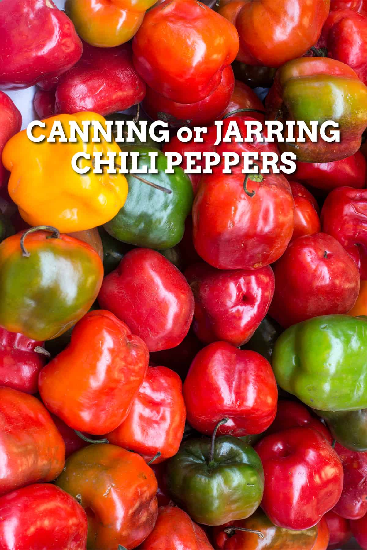 Canning or Jarring Chili Peppers