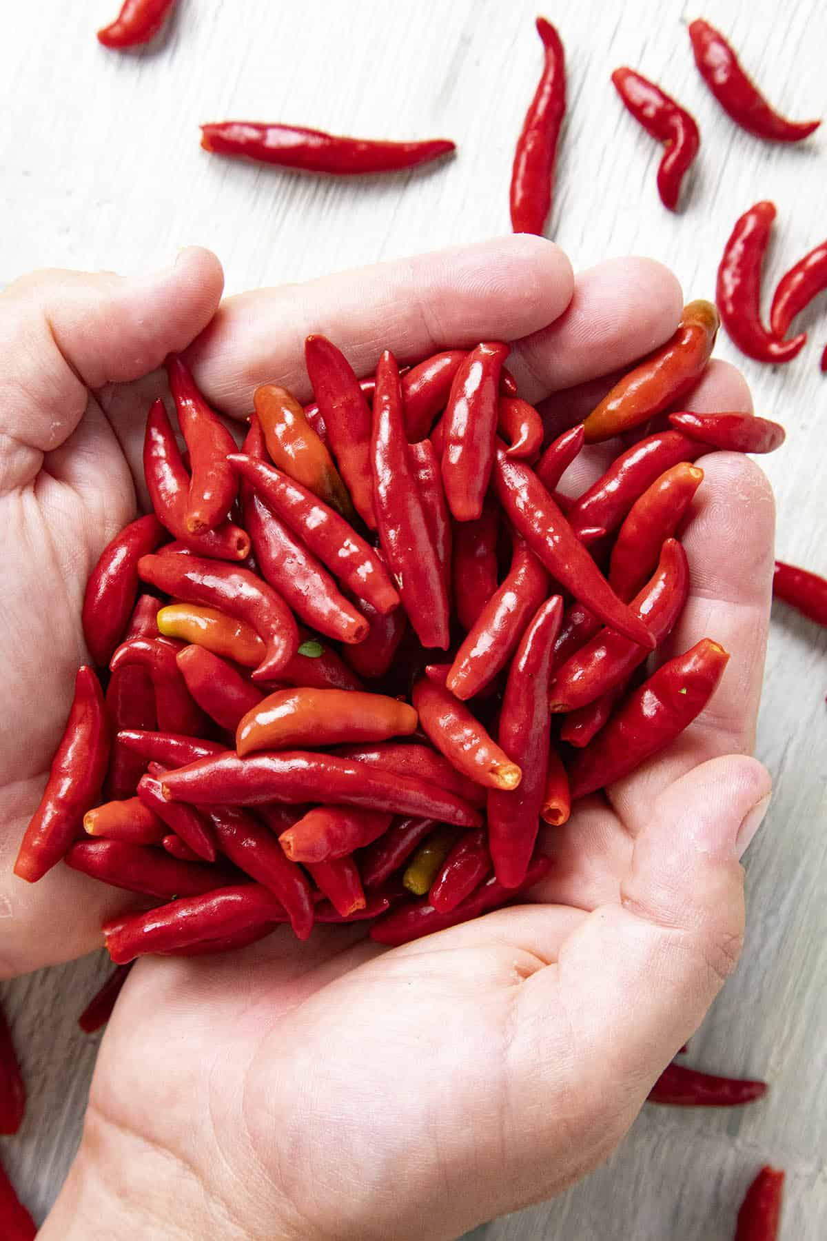 Chile de Arbol Peppers