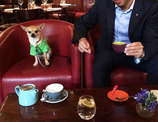 Chilliwawa dog blog having a coffee