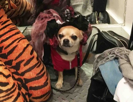 Chilliwawa dog blog Halloween costume shopping