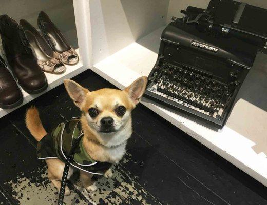 Chilliwawa with a typewriter