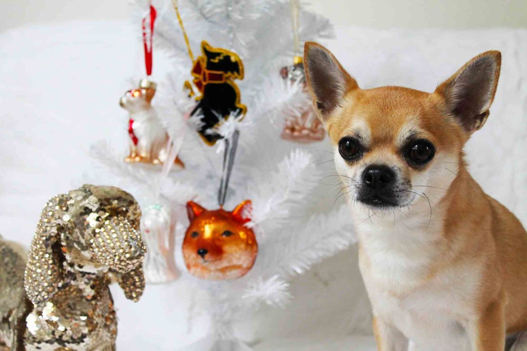 Chilli and his John Lewis Christmas Dog ornaments