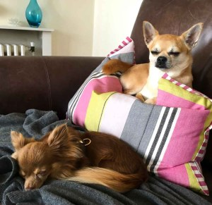 Chilli and Lucky