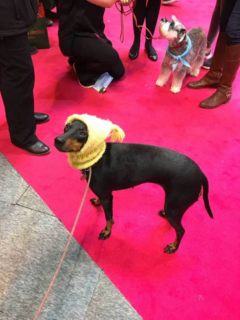 Might Mabel dog at Crufts