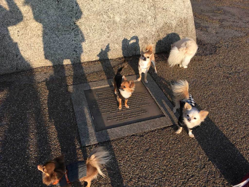Chihuahuas in Hyde Park