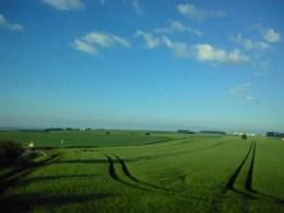 Grünes Getreidefeld mit Spuren die eion Tracktur hinterlassen hat