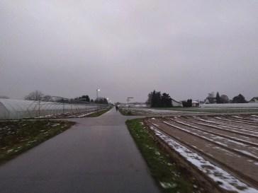 Im Handschuhsheimer Feld, Weg kreutzt.