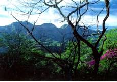 Selva baja caducifolia en época de lluvias. Zona guarijía, Álamos, Sonora.