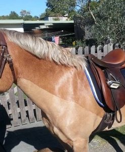 English Riding Tack