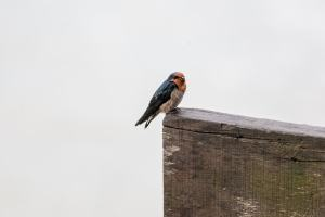 small smoky bird on brick