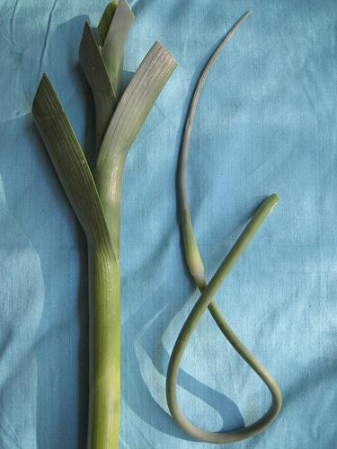 garlics.jpg