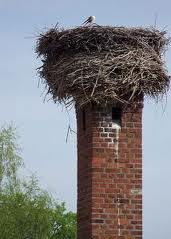 Remove A Bird's Nest From A Chimney