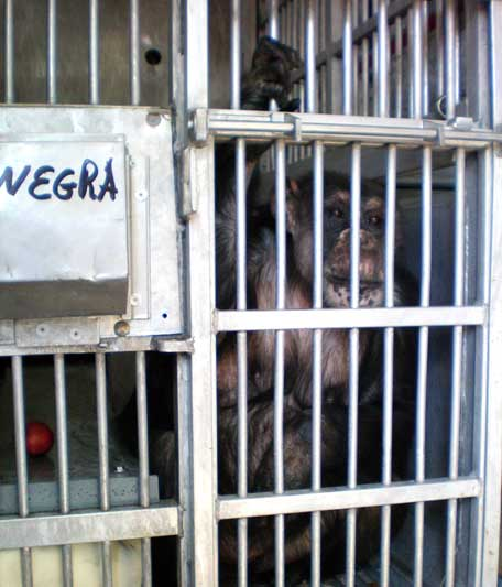 Negra in transport cage
