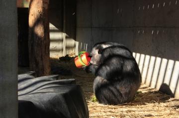 Negra with small bucket of granola