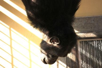 3-13-09-foxie-jamie-play-1