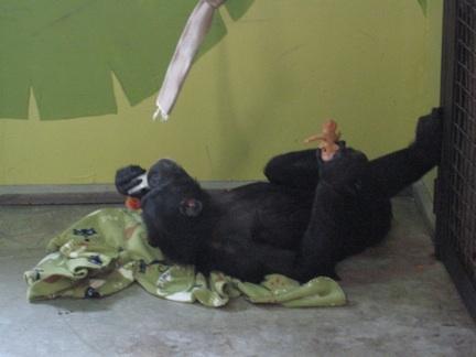 web Foxie nest blanket troll IMG_0688