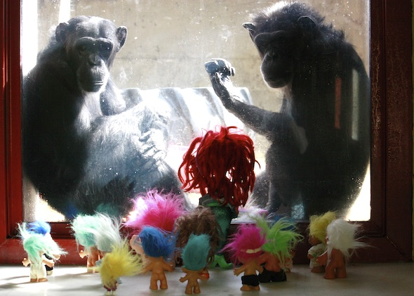 Foxie and Annie in window, troll dolls on bench