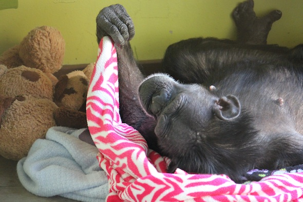 Jody nesting in playroom