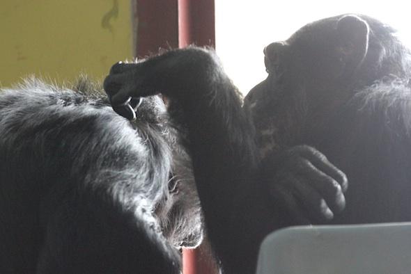 Missy grooming Jamie