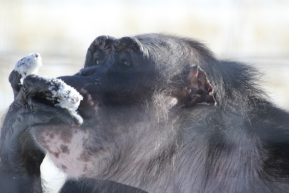 web Negra eat snow YH hand in mouth IMG_1027