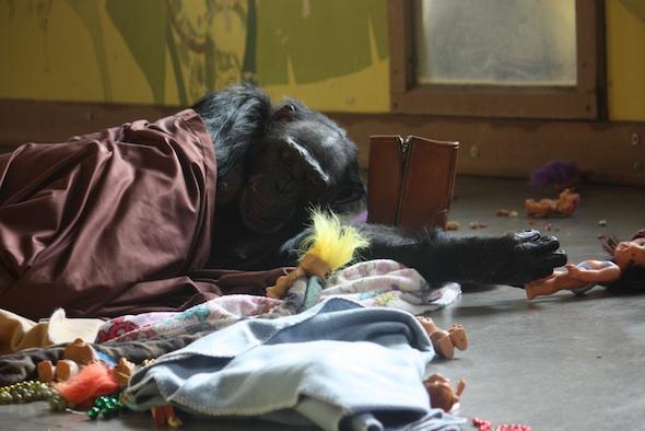 web jamie lay in nest sheet blanket troll boot enrichment pr IMG_0714
