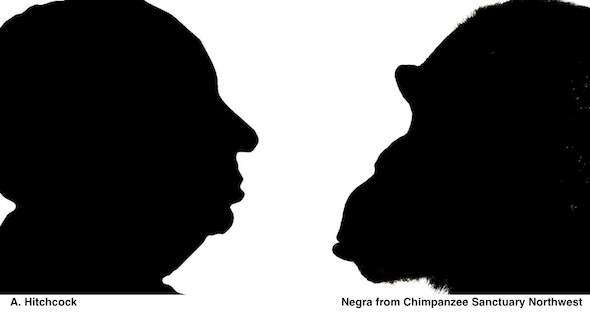Negra Chimpanzee and Alfred Hitchcock in silhouette