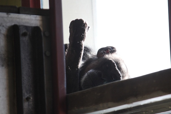 web Jody eat snow lay in nest window PR IMG_2081