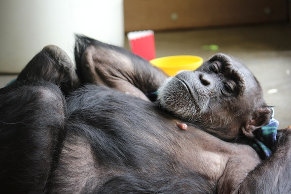 web Jody lie on back stretch blanket nest playroom PR IMG_6894