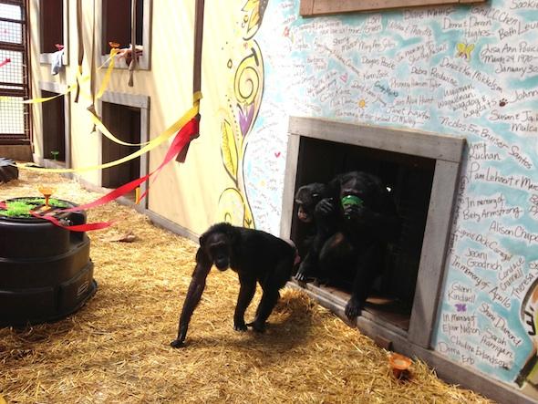 web Jody Jamie Burrito cinco de mayo party greenhouse GH IMG_6485