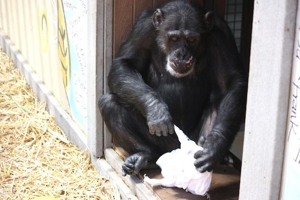 Missy pull on frozen towel