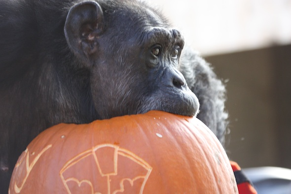 web_Jody_bite_pumpkin_birthday_halloween_party_GH_dg_IMG_5733
