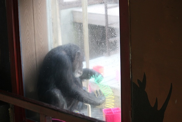 1-web_Missy_playing_with-slinky_window_GH_ls_IMG_7644