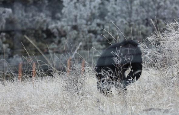 jamie running frost background