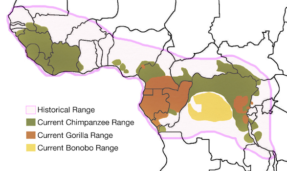 africadistribution
