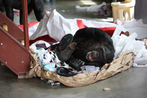 web_Jamie_lie_in_huge_nest_paper_blankets_boots_yawn_look_at_camera_PR_ek_IMG_8995