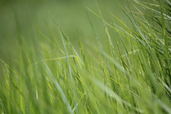 web_grass_up_close_yh_kd_IMG_9680