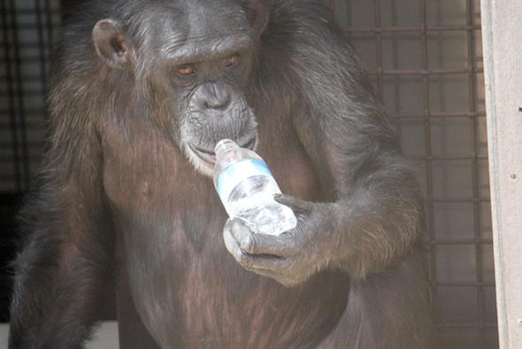 web_Foxie_drink_from_water_bottle_GH_ek_IMG_9998