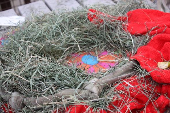 nest with hay