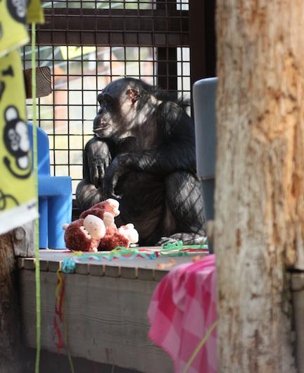 web_crop_Negra_stuffed_monkey_GH_IMG_1821