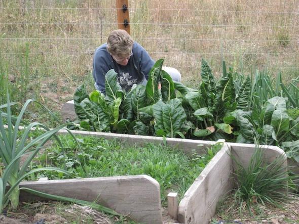 web_Demice volunteer in garden IMG_7051