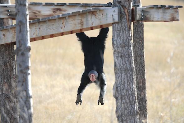 Jamie hanging