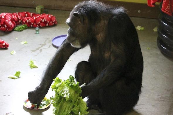 web_annie_lettuce_forage_birthday_party_pr_ek_IMG_2066