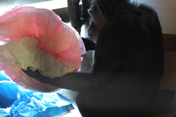 web_annie_forage_tissue_paper_flower_pr_dm_IMG_9166