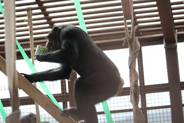 web_missy_carry_fruit_cup_in_mouth_climb_up_platform_forage_st_patrick's_day_party_gh_ek_IMG_9709