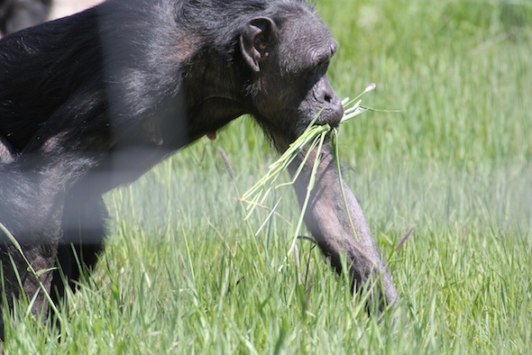 web_Jody_gather_grass_in_mouth_YH_kh_IMG_1208