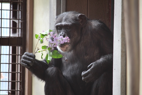 web_Mothers_Day_Jody_birthday_Missy_sit_window_eat_lilacs_GH_kh_IMG_2401